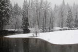 Snow Falling in a Forested Landscape Along the Merced River