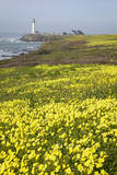Pigeon Point Lighthouse and Spring Wildflowers Along the Coastline
