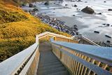 Seashore Stairwell
