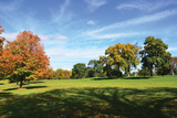 Fall Trees and Shadows