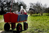 A Dutch Girl Enjoys the Sun While Resting in Her Cart in a Meadow in Oeffelt  the Netherlands