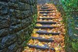 Cobblestone Foliage