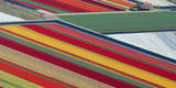 Aerial View of Fields of Flowers Near Lisse  Netherlands