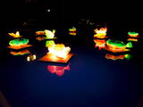 Lotus-Shaped Lanterns are Floated on a Pond in Wonju  Gangwon Province