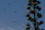 Paragliders in Action