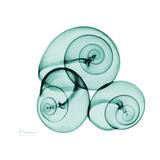 Escargots Reproduction d'art par Albert Koetsier