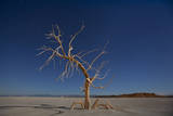 America's Dead Sea: California's Salton Sea Has Is One of the Worst Environmental Sites in the Us