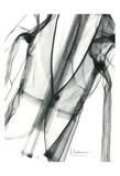 Editorial X-Ray Jacket