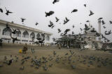 A Kashmiri Muslim Feeds Pigeons in Srinagar  the Summer Capital of Indian Kashmir