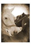 Horse's Kiss Sepia 2