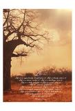 Baobab Life 1