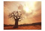 Baobab Life