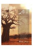 Baobab Life 2