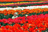 The Child of an Indian Tourist Sits Among Tulip Flowers in Siraj Bagh Tulip Garden in Srinagar
