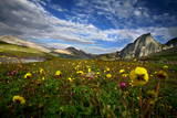 Wild Flowers Bloom in the Backdrop of Rugged Mountains Near the High Altitude Vishansar Lake Valley