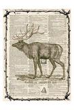 Elk Left