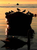 Silhouette of Birds on a Boat with a San