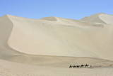 Camels in Desert in Dunhuang  Gansu Province  North Eastern China
