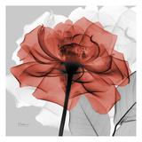 Rose on Gray 1