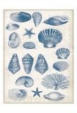 Blue Shells 2