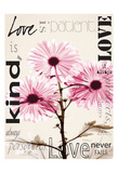 Chrysanthemum Love