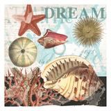 Coral Dream Shells