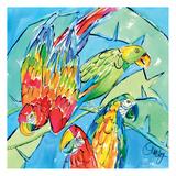 Parrots Square