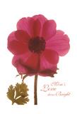 Magenta Magnolia