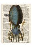 Squid 1