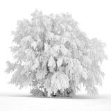 Not just white Papier Photo par Philippe Sainte-Laudy
