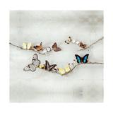 Array of Butterflies