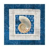 Sea Shell II on Blue