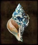 Ocean Treasure III