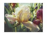 Corrine's Iris
