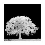 Screened Tree C
