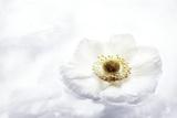 La Fleur Tranquille II