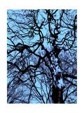 Infared Tree 12