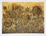Untitled - Sunflowers