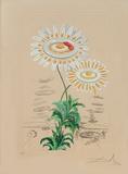 Chrysanthemum Frutescens from Flora Dalinae