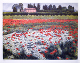 Untitled - Poppy Fields