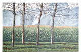 Birches and Cornfields