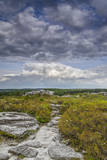 USA  West Virginia  Davis Landscape in Dolly Sods Wilderness Area