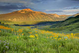 USA  Colorado  Crested Butte Landscape of wildflowers and mountain