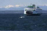Ferry approaching Colman Dock on Elliott Bay  Seattle  Washington  USA