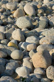 USA  Massachusetts  Gosnold Rocky shoreline of Cuttyhunk island