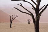 Rainy weather in early morning  Deadvlei  Namib-Naukluft Park  Namibia