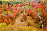 Autumn colors in Rocky Mountains  Wyoming  USA