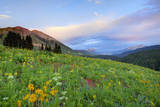 USA  Colorado  Crested Butte Landscape of wildflowers and mountains