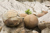 USA  North Dakota  Theodore Roosevelt NP  Cannonball Concretions