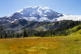 USA  Washington  Mount Rainier NP  Mount Rainier and meadow